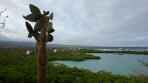 Santa Cruz, Las Grietas, Blick auf Puerto Ayora