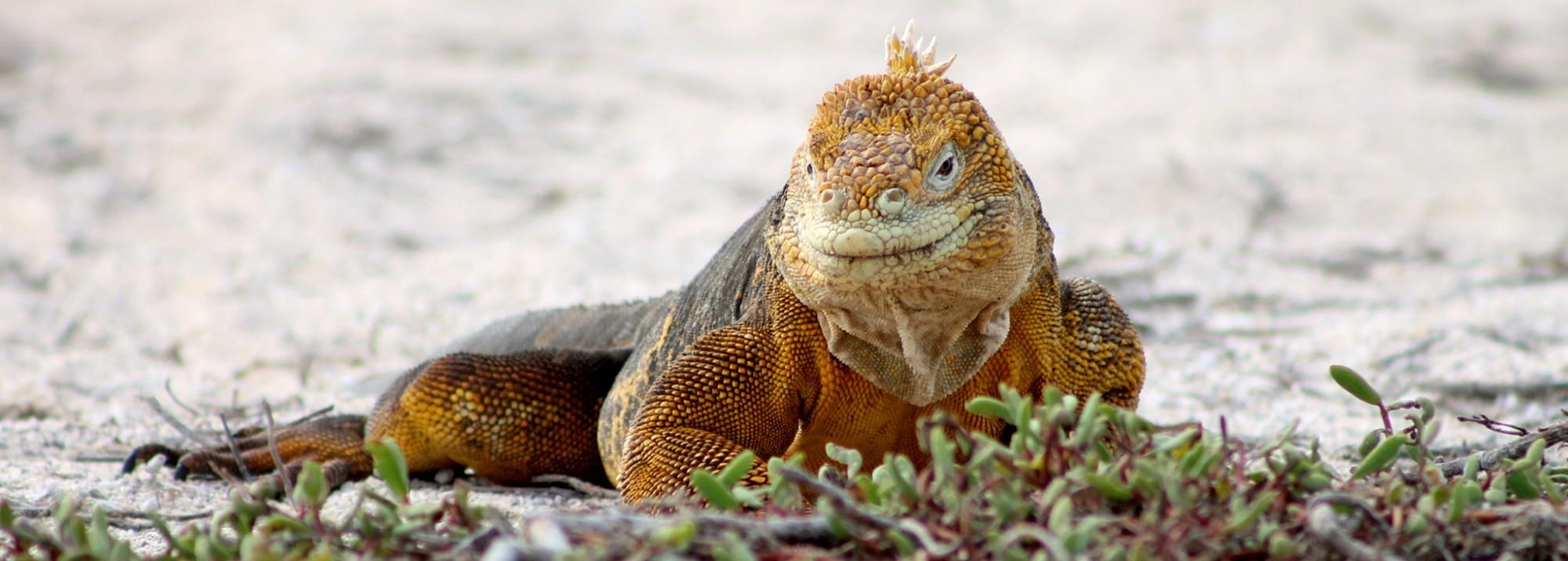 Galapagos, La Pinta, North Seymour