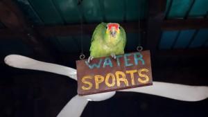 Mexiko, Laguna Bacalar, Hostel Magic Bacalar: Und der Papagei passt auf